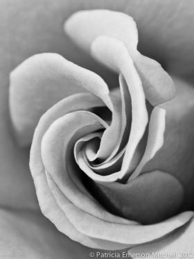 B&W_Rose_Swirl
