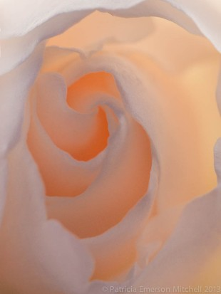 Backlit_Rose