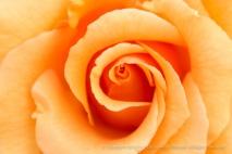 Brandy Rose (I), 6.6.16