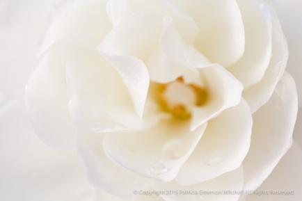 December_White,_12.4.15