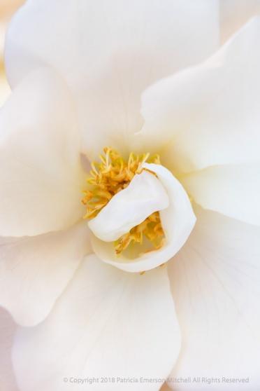 Demure Rose, 12.6.18