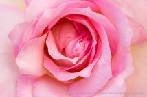 Elle Rose (III), 6.6.16