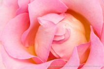 Elle Rose (II), 6.6.16