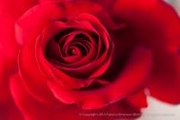 First_Shot-_Crimson_Bouquet,_12.29.14_