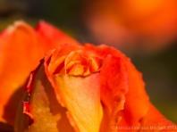 First_Shot-_Yellow_&_Orange,_12.16.13