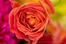 Kathy's Flowers, 6.2.18