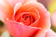 Loeta Liggett Rose, 10.29.18
