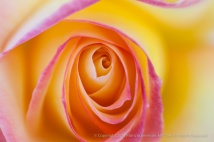 Love_&_Peace_(II),_4.1.15