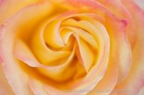 Love_&_Peace_(I),_4.1.15