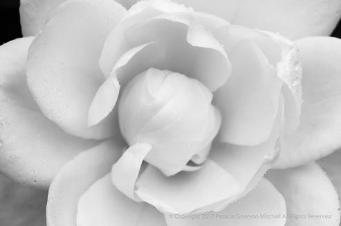 Monochrome Rose, 12.14.16