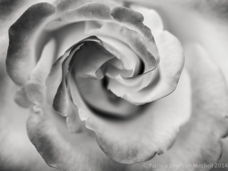 Monochrome_Rose,_5.5.14