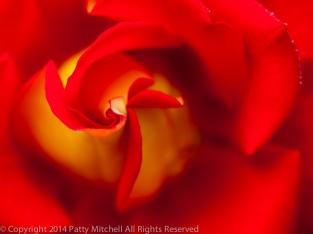 Municipal_Rose_Garden-_K&M,_9.10.14