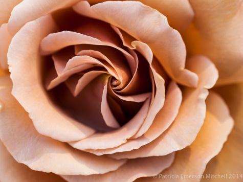 Municipal_Rose_Garden-_Koko_Loco_(II),_4.28.14