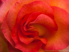 Municipal_Rose_Garden-_Mardi_Gras,_5.7.14