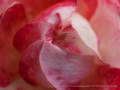 Municipal_Rose_Garden-_Mercury_Rising,_9.29.14
