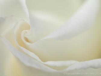 Municipal_Rose_Garden-_Moondance,_4.18.14