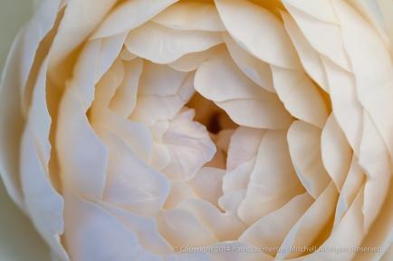 Municipal_Rose_Garden-_Windermere,_7.4.14