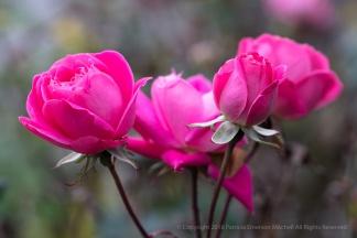 Pink Bouquet, 1.5.18