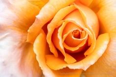 Orange & Cream, 5.23.18