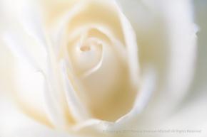 Unsharp: Canadian White Star, 8.19.15