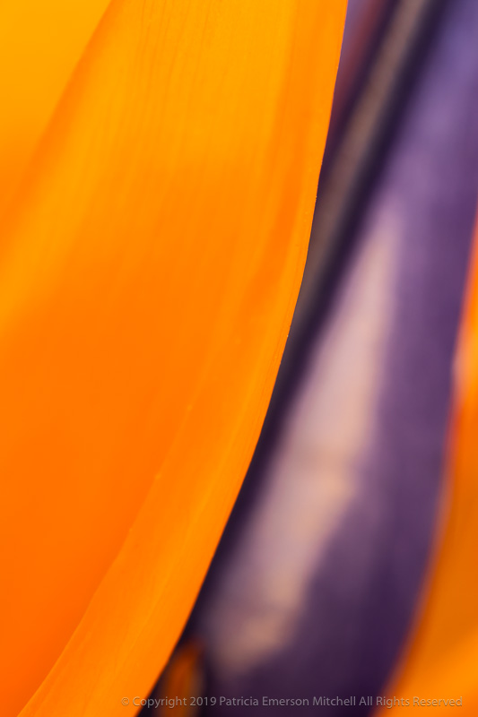 Abstract_Strelitzia,_4.9.18.jpg