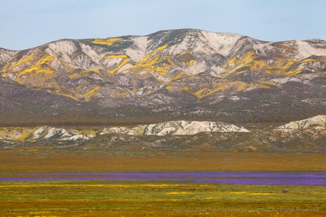 Wildflower_Colors_at_Carrizo_Plain,_4.1.19.jpg