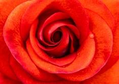 Smokin' Hot Rose, 5.6.19