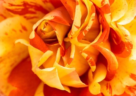 Yellow & Orange, 5.22.19