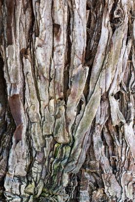 Tree_Bark,_9.26.19