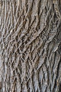 Tree_Bark,_9.27.19-2