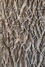 Tree_Bark,_9.27.19-3