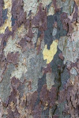 Tree_Bark,_9.27.19-4