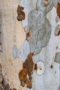 Tree_Bark,_9.27.19-5