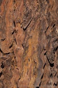 Tree_Bark,_9.27.19-6