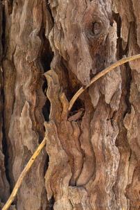 Tree_Bark,_9.27.19-7