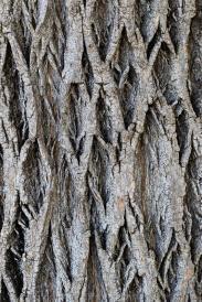 Tree_Bark,_9.27.19