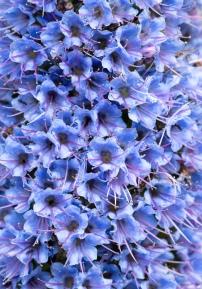 Blue, 4.29.20